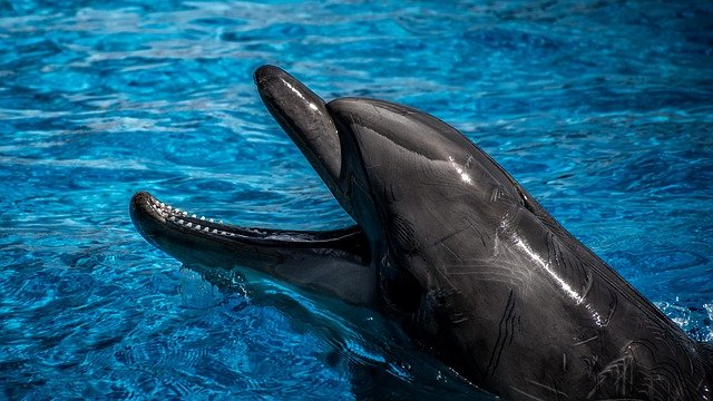hlava delfína