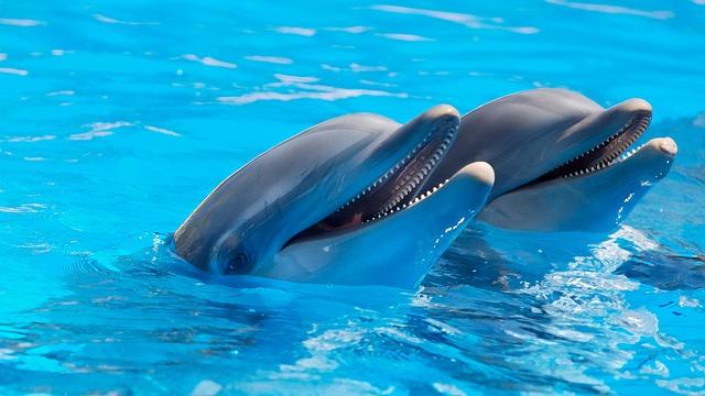 roztomilý delfíni