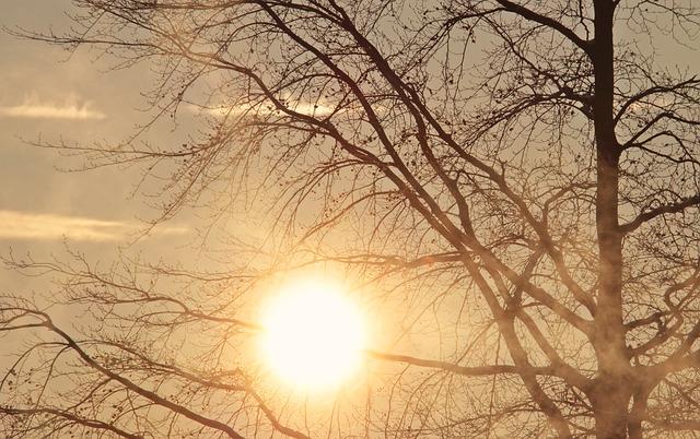 slunce za stromem.jpg